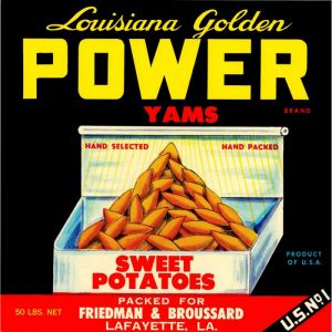 Louisiana Golden Power Yams