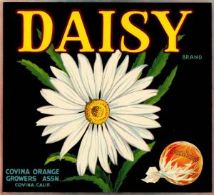 Daisy - Fruit Crate Label